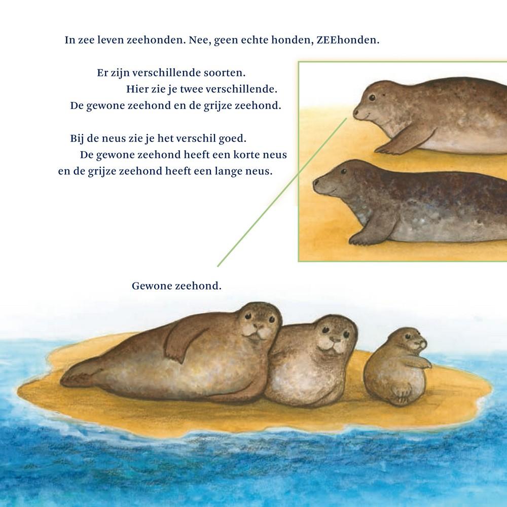 weetjes over zeehonden