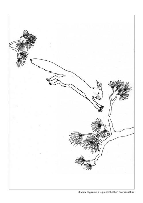 Kleurplaat Nacht Zeg Kleine Eekhoorn Kinderboek Natuur