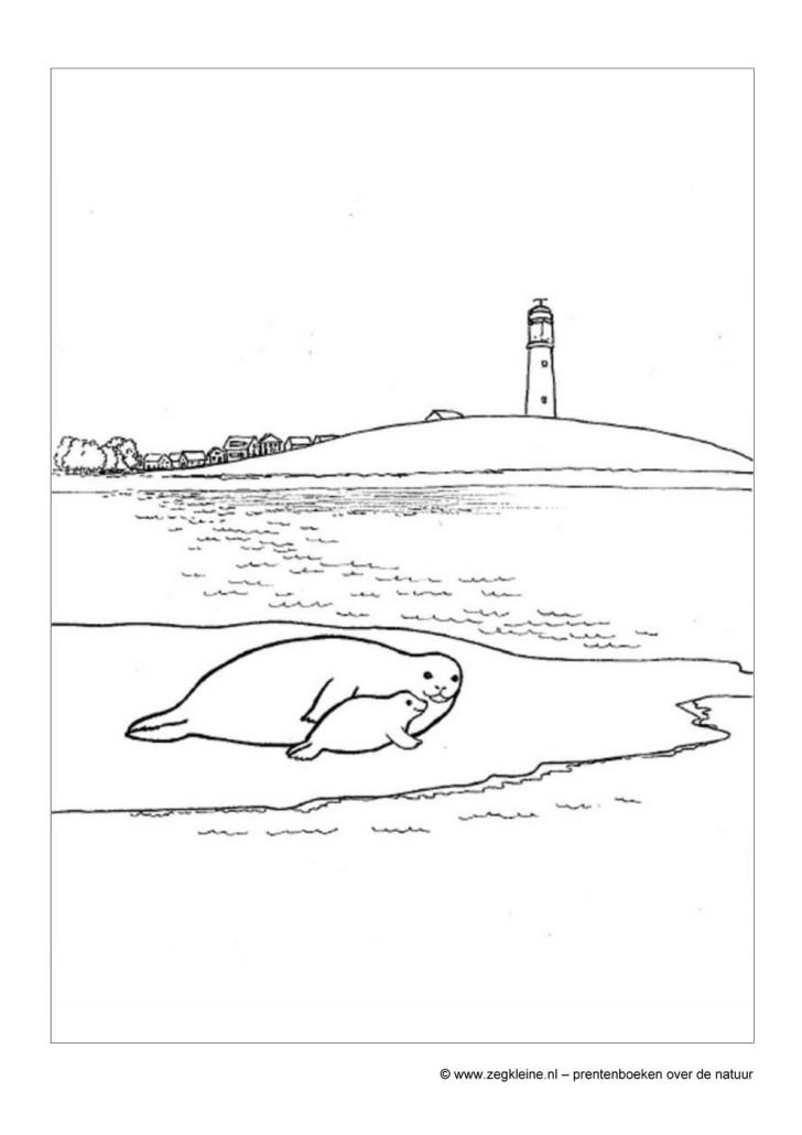 Kinder Kleurplaten Van Dieren Spelletjes Zeg Kleine Zeehond Prentenboek Voor Peuters En Kleuters