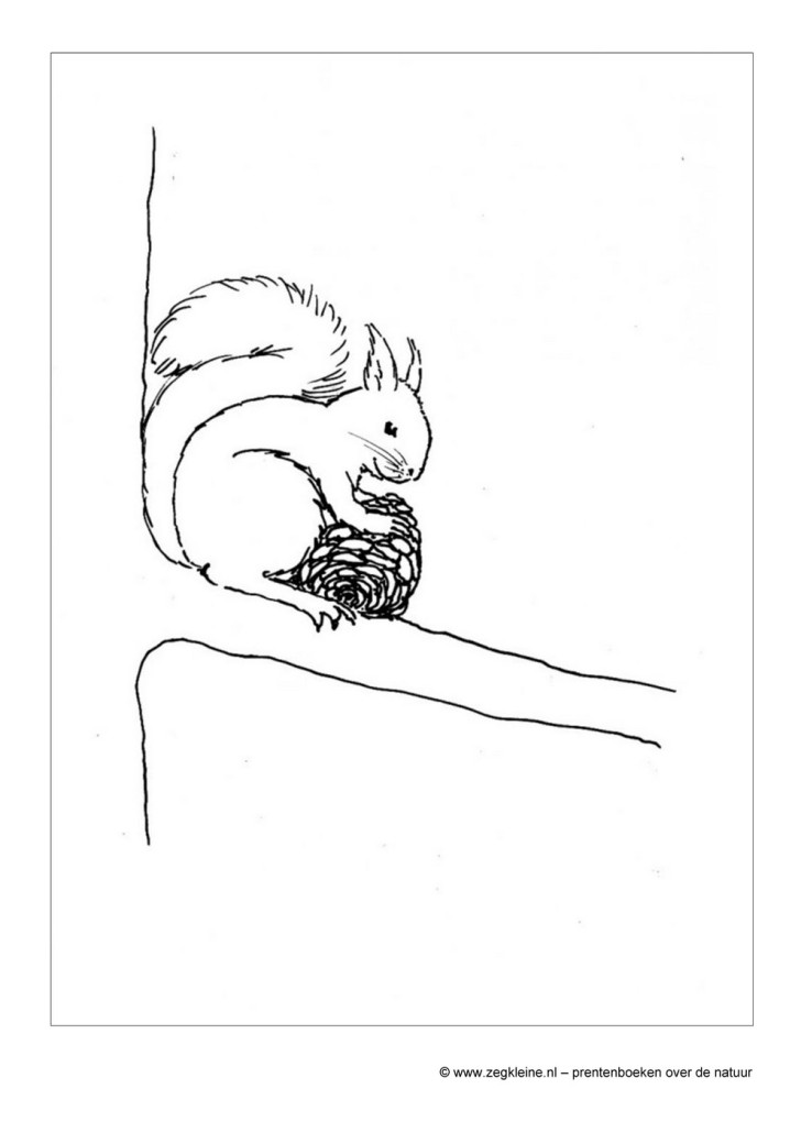 Uitgelezene Zeg kleine eekhoorn - kinderboek natuur WC-28