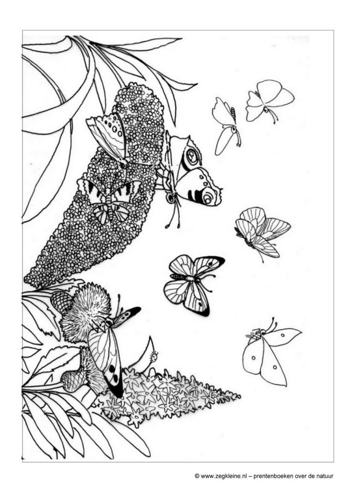 Actieve Senioren Kleurplaat Kleurplaten Vlinders En Rupsen Artismonline Nl