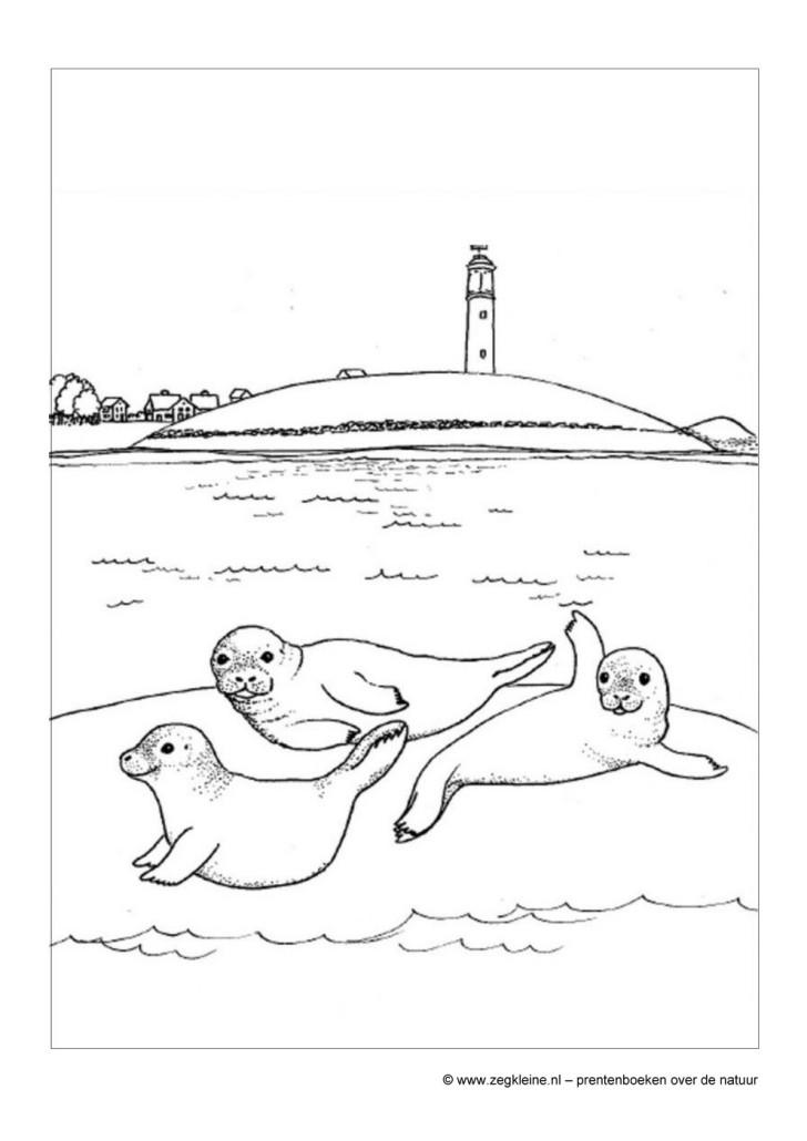 Dieren Kleurplaat Kinderen Zeg Kleine Zeehond Prentenboek Voor Peuters En Kleuters